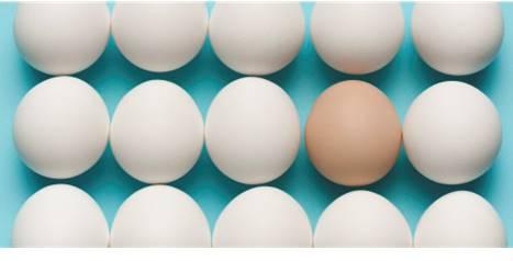 Egg-Pore-Line-b
